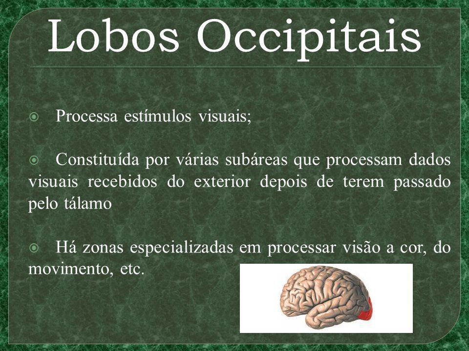 Lobos Occipitais Processa estímulos visuais;