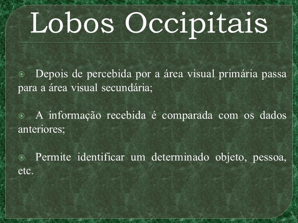 Lobos Occipitais Depois de percebida por a área visual primária passa para a área visual secundária;