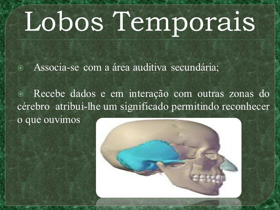 Lobos Temporais Associa-se com a área auditiva secundária;