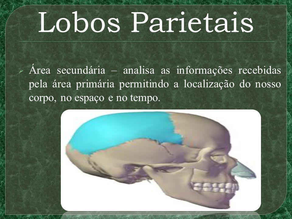 Lobos Parietais Área secundária – analisa as informações recebidas pela área primária permitindo a localização do nosso corpo, no espaço e no tempo.