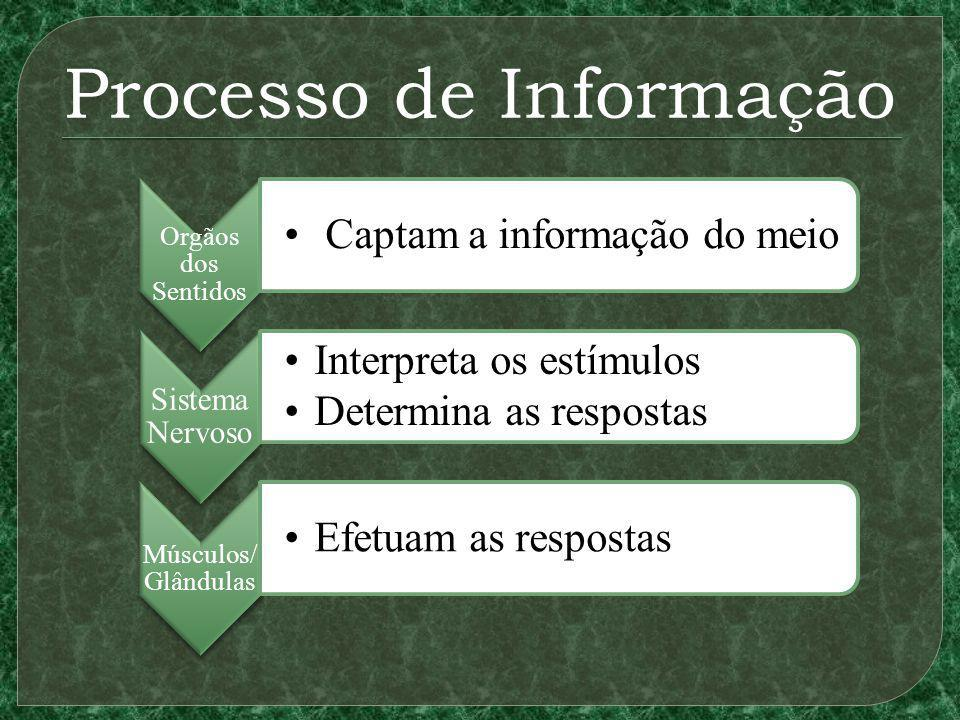 Processo de Informação