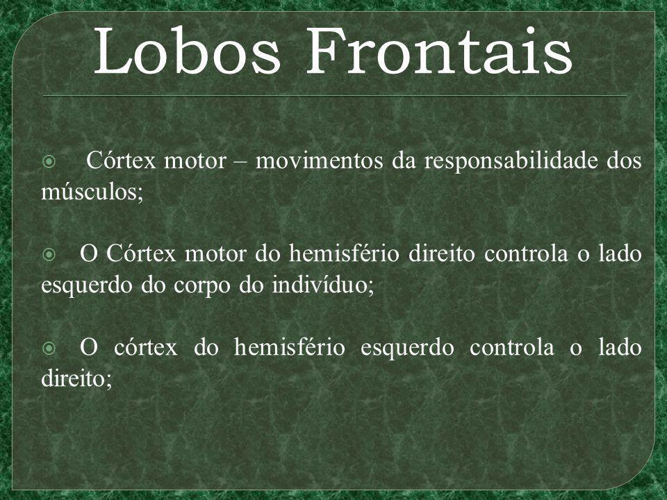 Lobos Frontais Córtex motor – movimentos da responsabilidade dos músculos;
