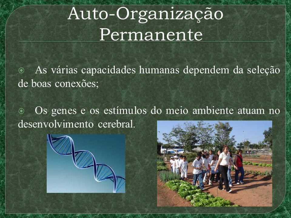 Auto-Organização Permanente