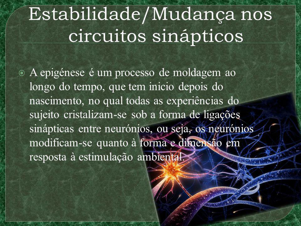 Estabilidade/Mudança nos circuitos sinápticos