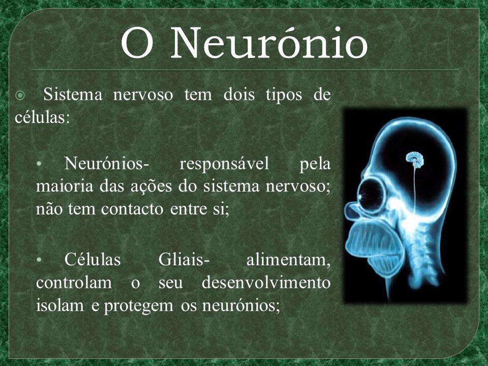 O Neurónio Sistema nervoso tem dois tipos de células: