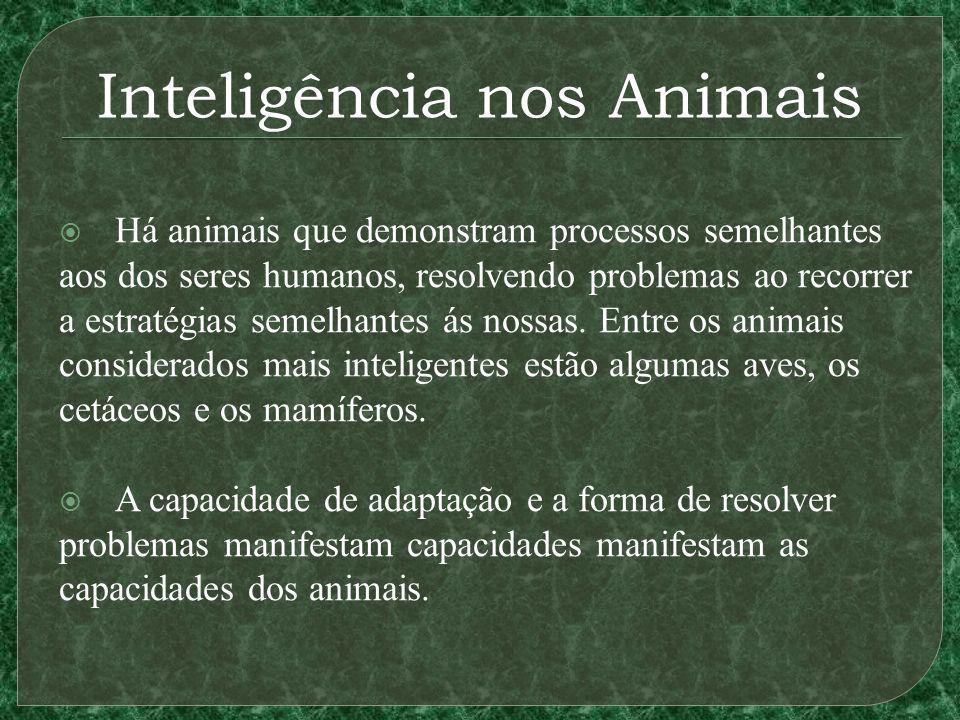 Inteligência nos Animais