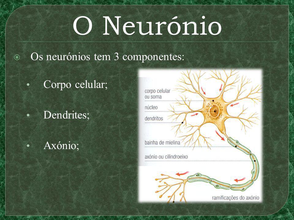 O Neurónio Os neurónios tem 3 componentes: Corpo celular; Dendrites;