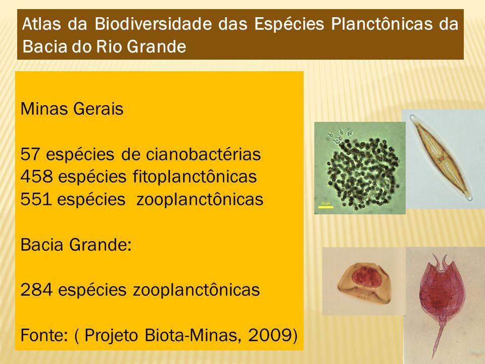 Atlas da Biodiversidade das Espécies Planctônicas da Bacia do Rio Grande