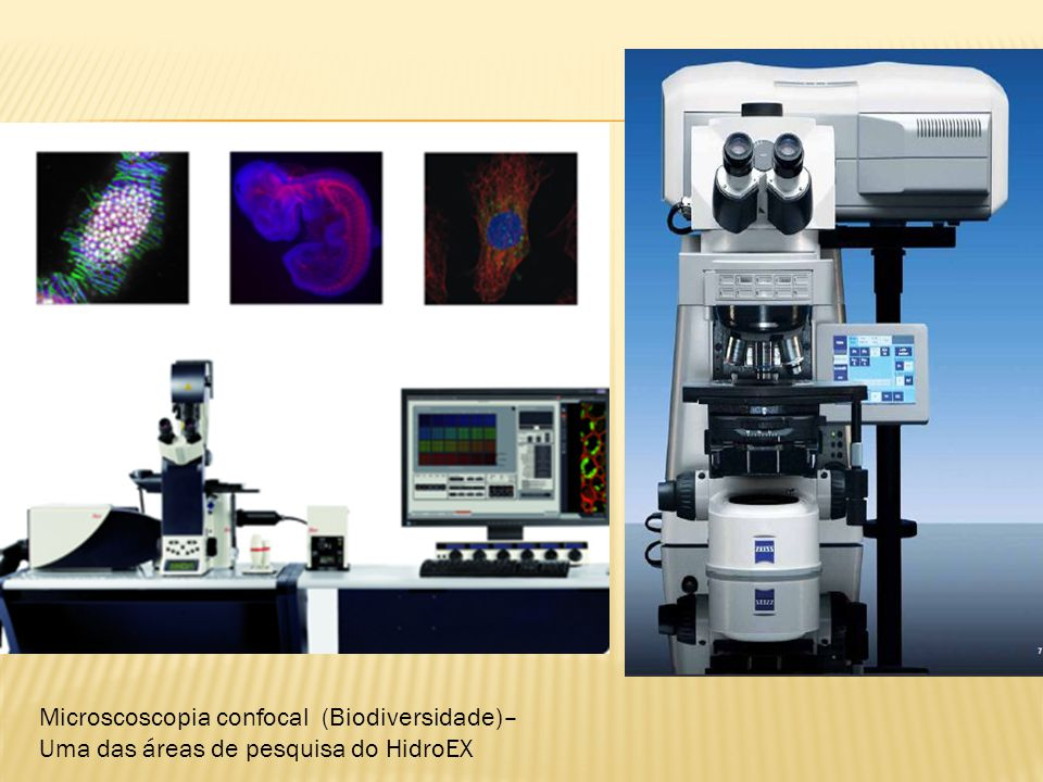 Microscoscopia confocal (Biodiversidade)–