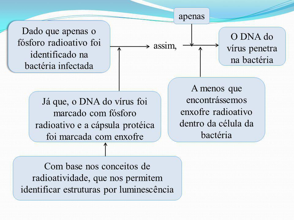 O DNA do vírus penetra na bactéria