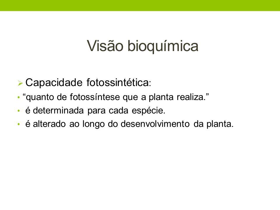 Visão bioquímica Capacidade fotossintética: