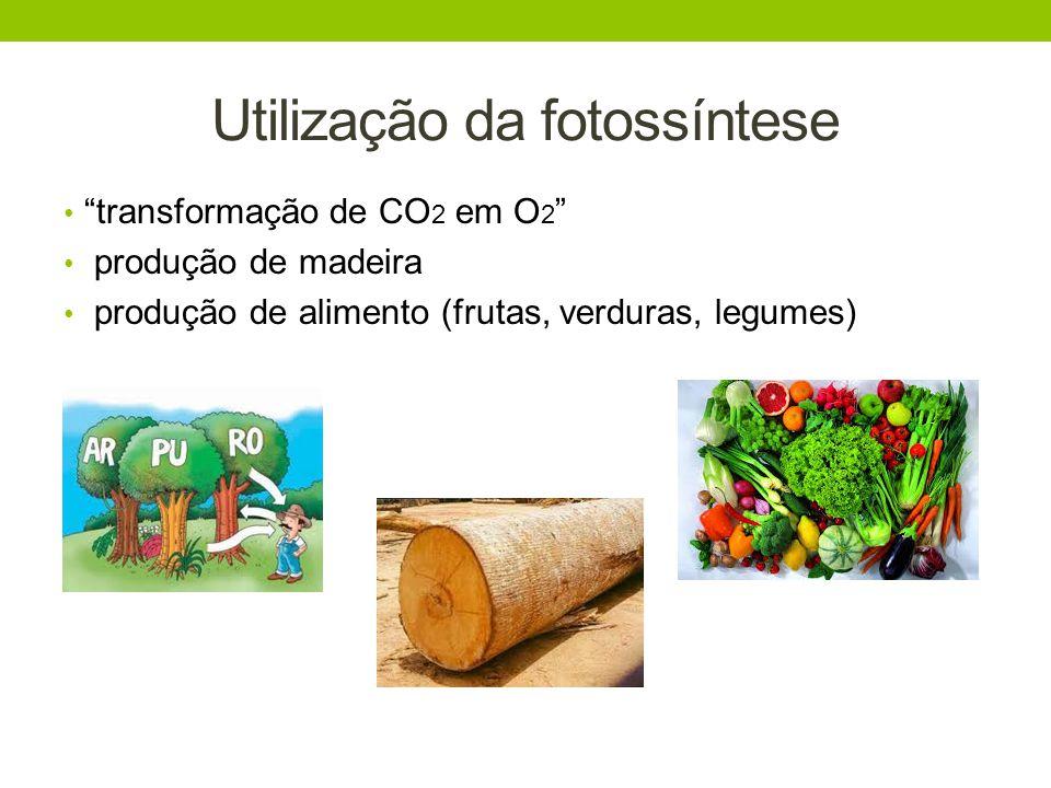 Utilização da fotossíntese