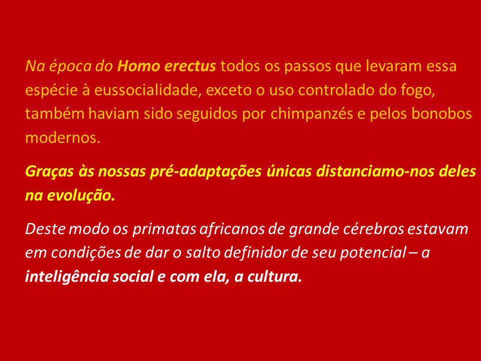 Na época do Homo erectus todos os passos que levaram essa espécie à eussocialidade, exceto o uso controlado do fogo, também haviam sido seguidos por chimpanzés e pelos bonobos modernos.