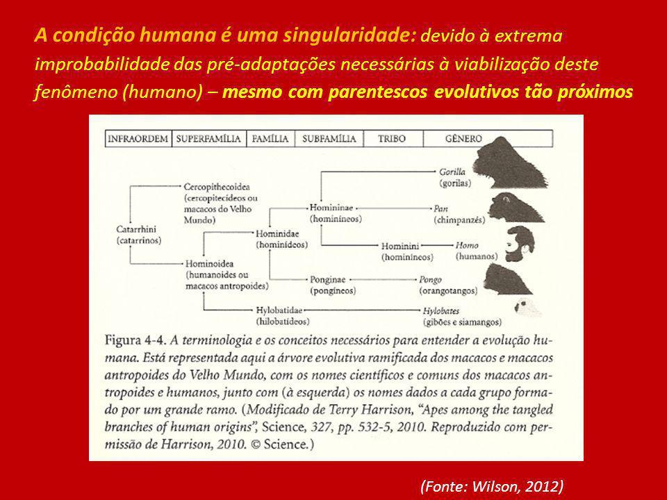 A condição humana é uma singularidade: devido à extrema improbabilidade das pré-adaptações necessárias à viabilização deste fenômeno (humano) – mesmo com parentescos evolutivos tão próximos