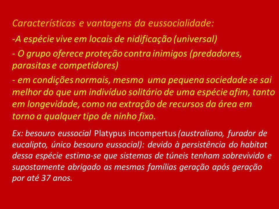 Características e vantagens da eussocialidade: