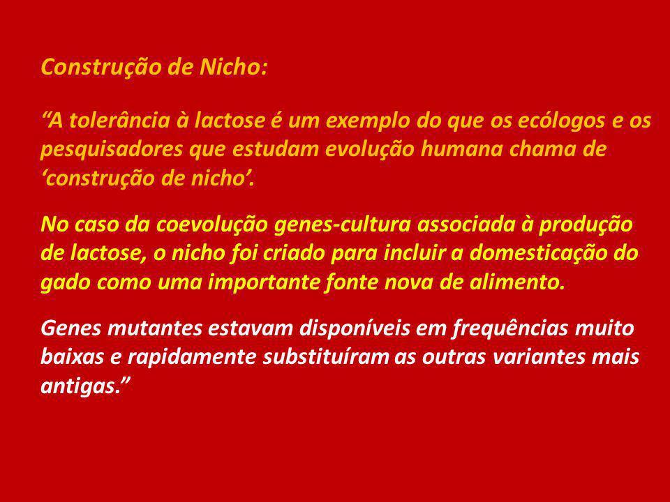 Construção de Nicho: