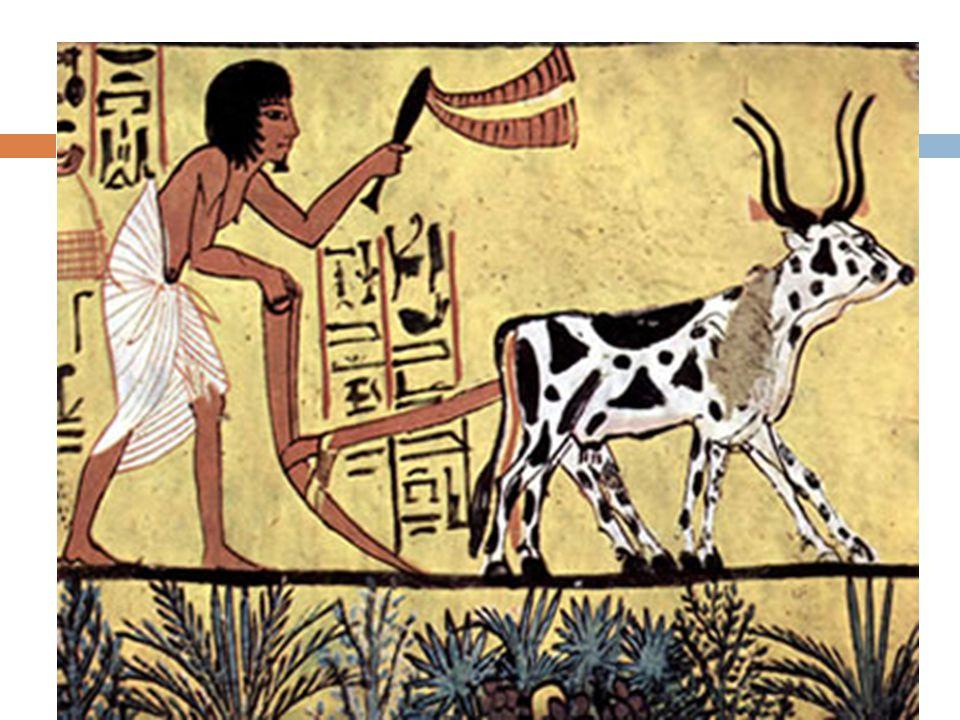 História Todos os povos da humanidade tiveram na gênese de sua existência duras necessidades. Obteção alimentos.