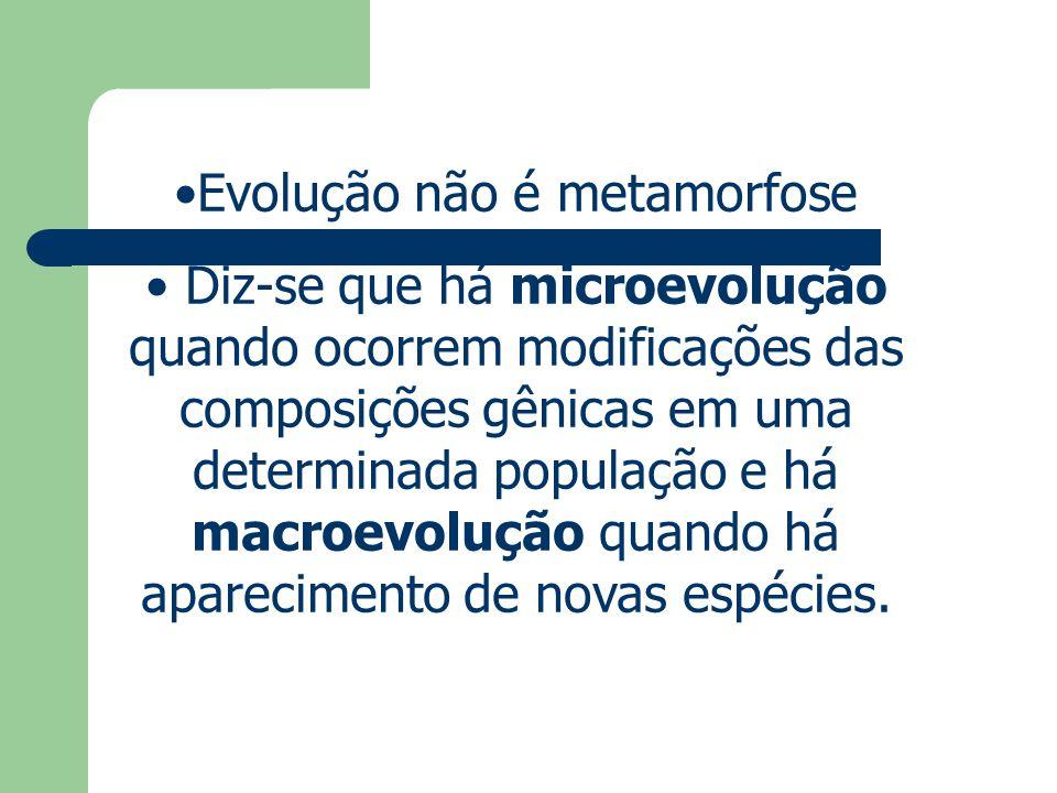 Evolução não é metamorfose