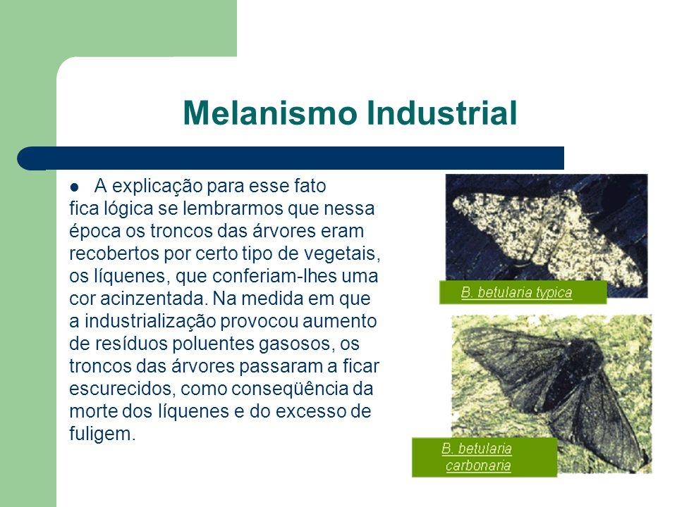 Melanismo Industrial A explicação para esse fato