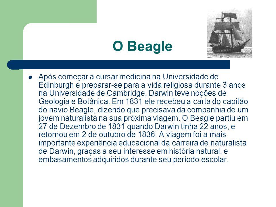 O Beagle