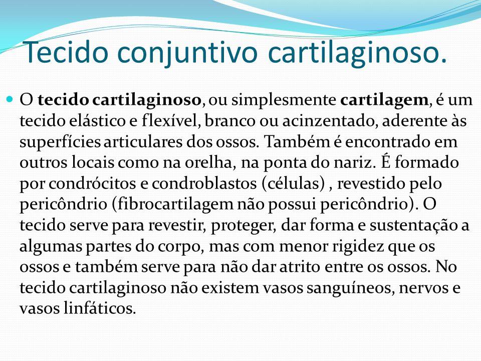 Tecido conjuntivo cartilaginoso.