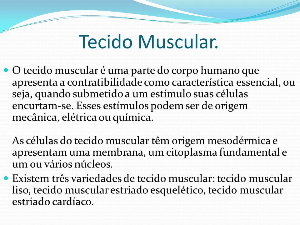 Tecido Muscular.