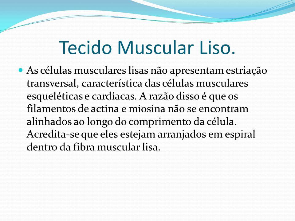 Tecido Muscular Liso.