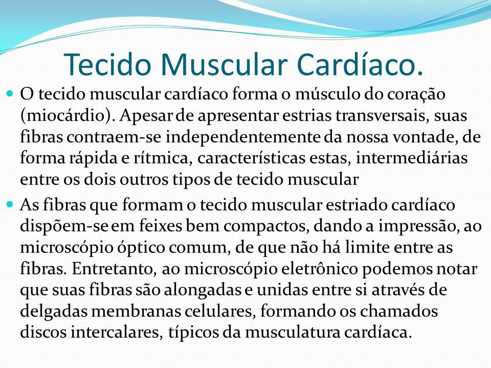 Tecido Muscular Cardíaco.