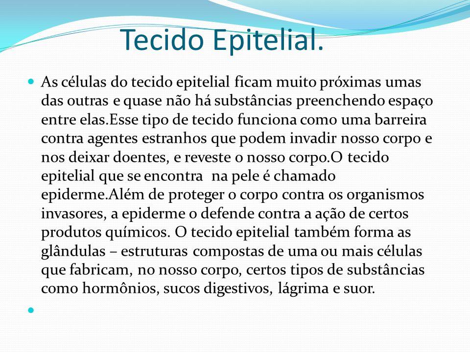 Tecido Epitelial.