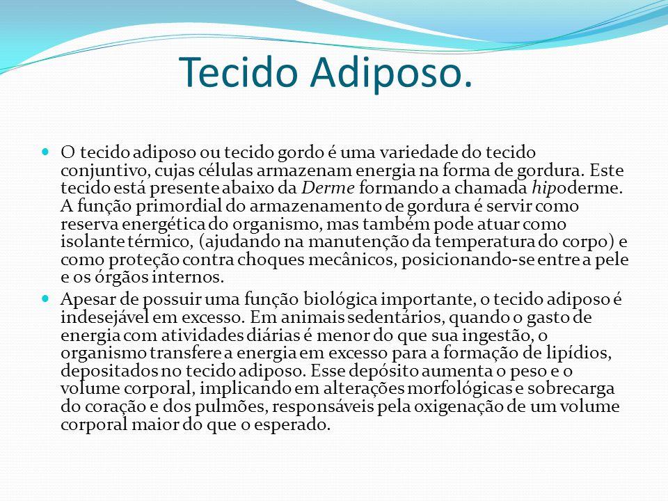 Tecido Adiposo.