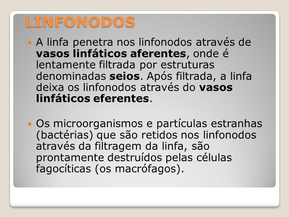 LINFONODOS