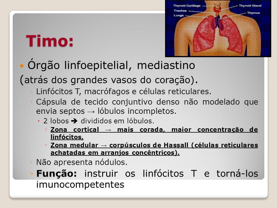 Timo: Órgão linfoepitelial, mediastino