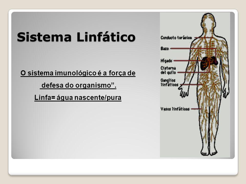 O sistema imunológico é a força de Linfa= água nascente/pura