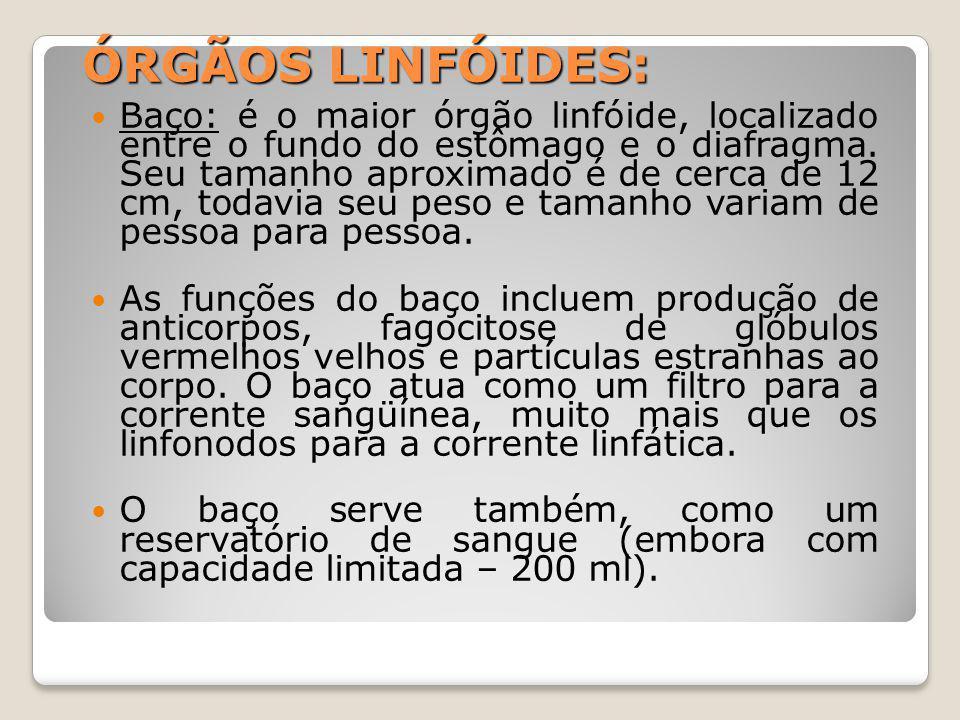 ÓRGÃOS LINFÓIDES: