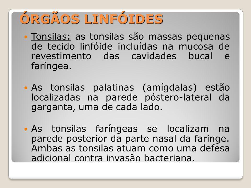 ÓRGÃOS LINFÓIDES Tonsilas: as tonsilas são massas pequenas de tecido linfóide incluídas na mucosa de revestimento das cavidades bucal e faríngea.