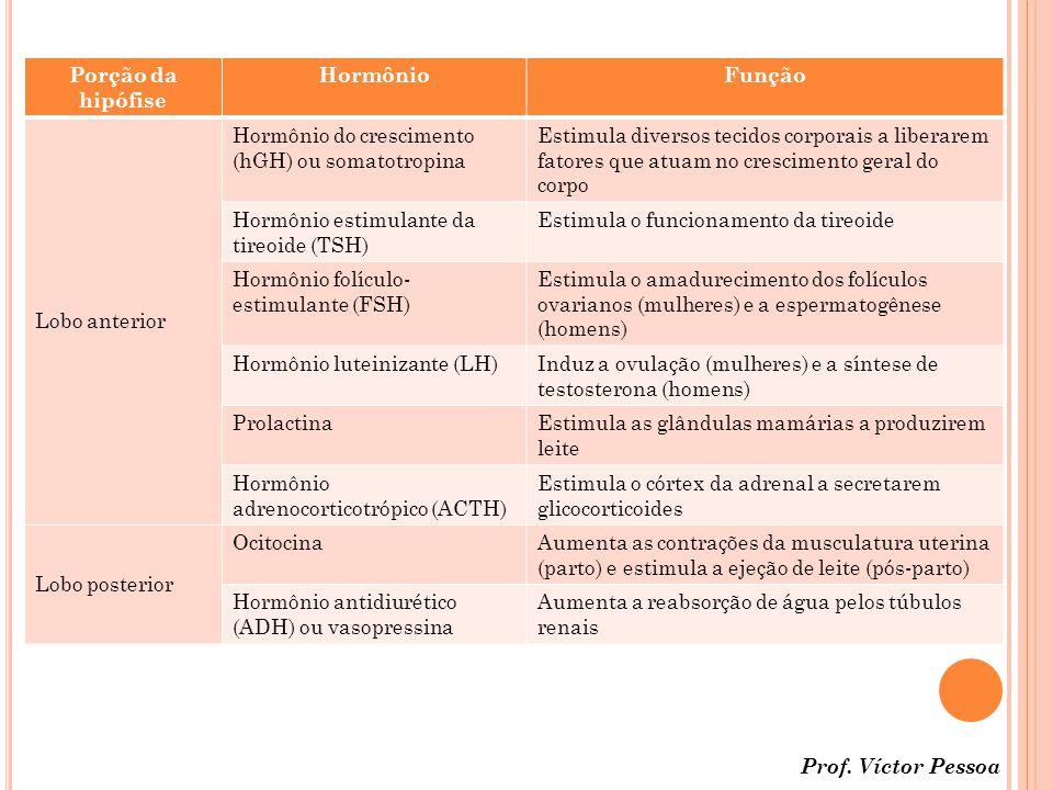 Porção da hipófise Hormônio. Função. Lobo anterior. Hormônio do crescimento (hGH) ou somatotropina.