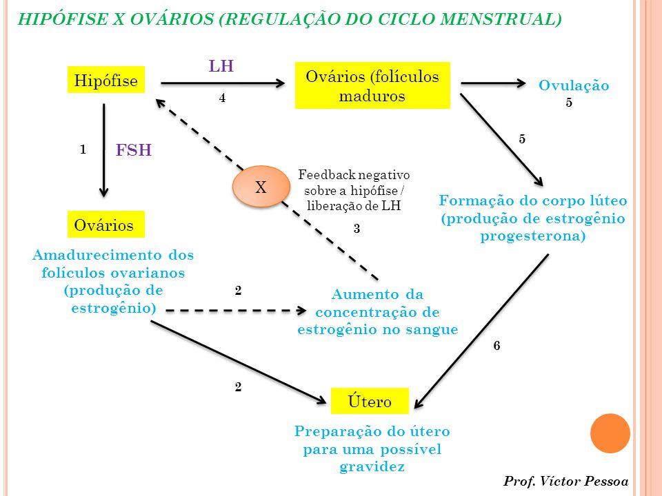 HIPÓFISE X OVÁRIOS (REGULAÇÃO DO CICLO MENSTRUAL)