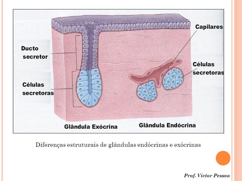 Diferenças estruturais de glândulas endócrinas e exócrinas
