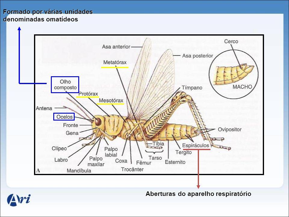 Aberturas do aparelho respiratório