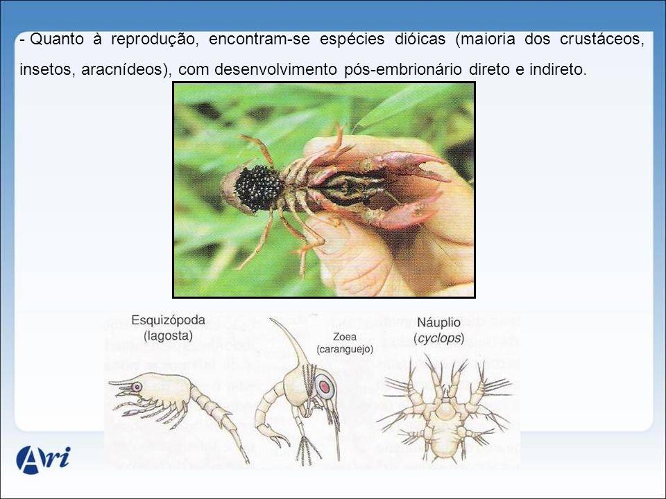 Quanto à reprodução, encontram-se espécies dióicas (maioria dos crustáceos, insetos, aracnídeos), com desenvolvimento pós-embrionário direto e indireto.