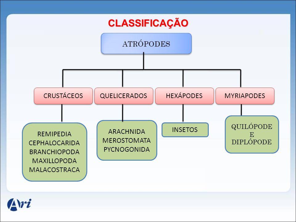 CLASSIFICAÇÃO ATRÓPODES CRUSTÁCEOS QUELICERADOS HEXÁPODES MYRIAPODES