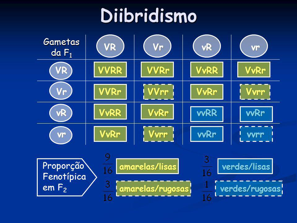 Diibridismo Gametas da F1 VR Vr vR vr VVRR VVRr VvRR VvRr VVrr Vvrr