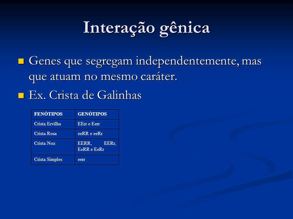 Interação gênica Genes que segregam independentemente, mas que atuam no mesmo caráter. Ex. Crista de Galinhas.