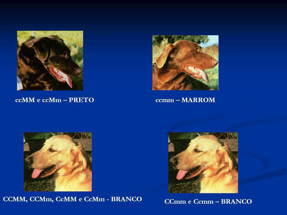 ccMM e ccMm – PRETO ccmm – MARROM CCMM, CCMm, CcMM e CcMm - BRANCO CCmm e Ccmm – BRANCO