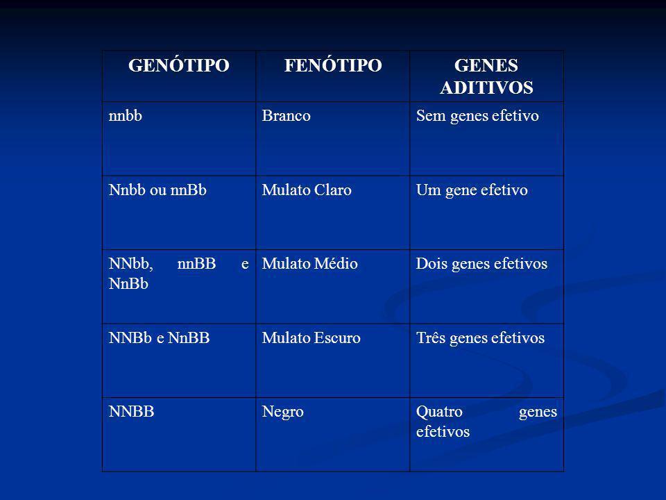 GENÓTIPO FENÓTIPO GENES ADITIVOS