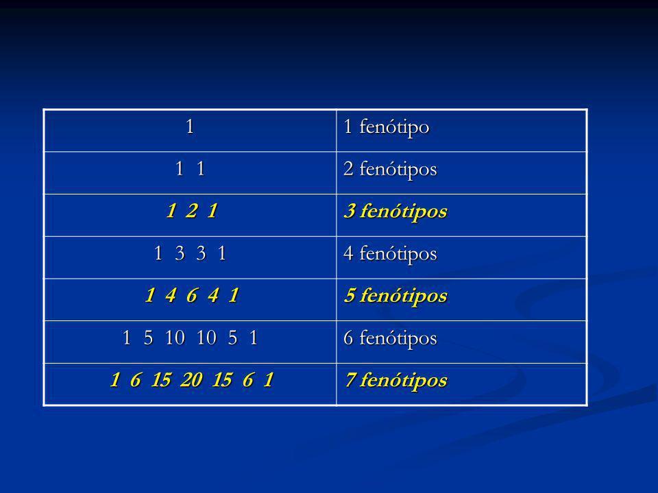 1 1 fenótipo. 1 1. 2 fenótipos. 1 2 1. 3 fenótipos. 1 3 3 1. 4 fenótipos. 1 4 6 4 1.