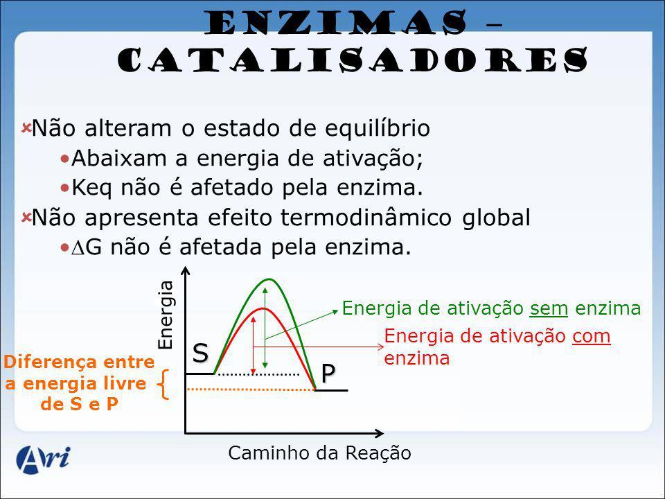 ENZIMAS – CATALISADORES
