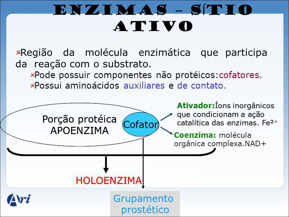 ENZIMAS – SÍTIO ATIVO Região da molécula enzimática que participa da reação com o substrato.