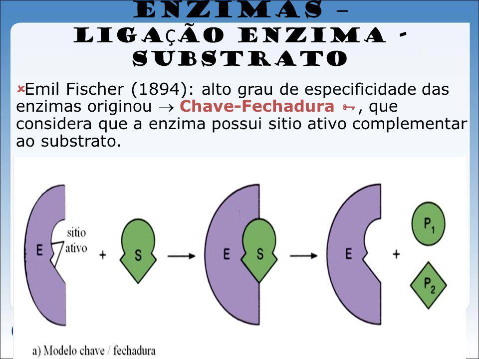 ENZIMAS – LIGAÇÃO ENZIMA - SUBSTRATO