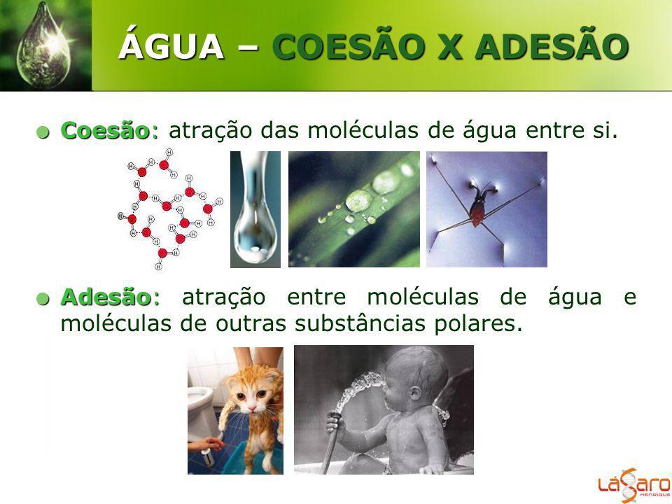 ÁGUA – COESÃO X ADESÃO Coesão: atração das moléculas de água entre si.